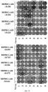 Пептидные вакцины против рака с экспрессией полипептидов mphosph1 или depdc1