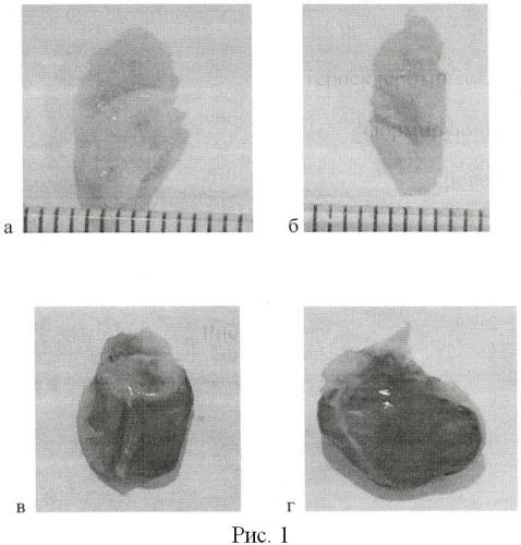 Средство для деструктуризации атеросклеротических образований, формирующихся на стенках кровеносных сосудов