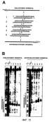 Малые молекулы рнк, опосредующие интерференцию рнк