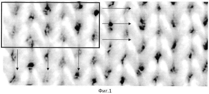 Способ определения геометрических характеристик петлеобразования трикотажного полотна по компьютерному изображению