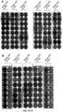 Вакцины на основе пептида foxp3