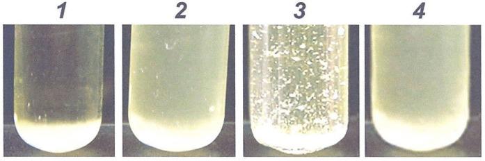 Белок, обуславливающий свойство аутоагглютинации клеток чумного микроба, и способ его получения