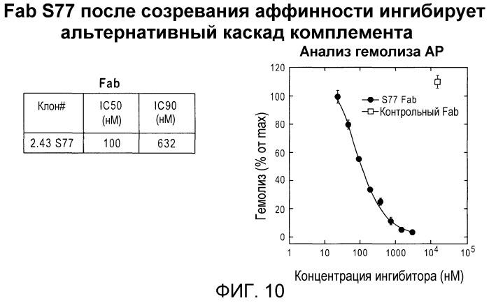 Антитела против c3b и способы профилактики и лечения связанных с комплементом нарушений