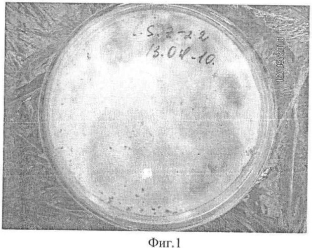 Способ получения селенсодержащего препарата биомассы laetiporus sulphureus mz-22