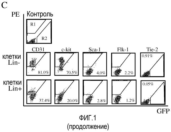 Выделенные популяции миелоподобных клеток и способы лечения с использованием таких популяций