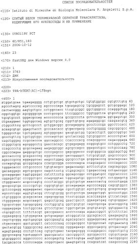 Слитый белок теломеразной обратной транскриптазы, кодирующие его нуклеотиды и их применение