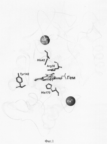 Мутантная форма пероксидазы хрена