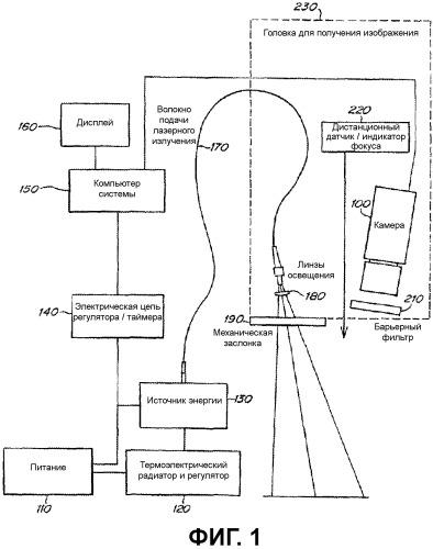 Способы визуализации и композиции, содержащие флюоресцентные красители, связанные с вирусными компонентами для визуализации нервов
