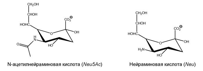 Исследование n-гликанов с использованием экзогликозидаз