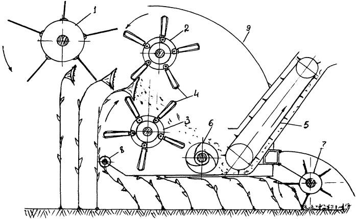 Способ уборки подсолнечника и устройство для его осуществления