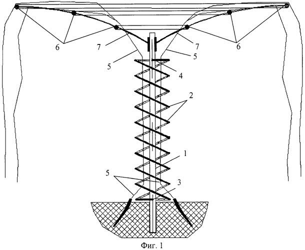 Способ формирования ствола и структуры кроны древовидного виноградника (вариант русской логики - версия 1)