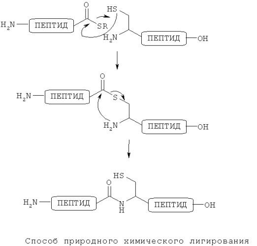 Способ получения пептида