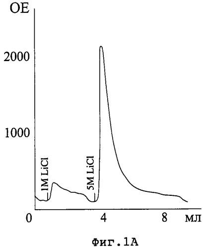 Способ получения высокоаффинных поликлональных антител