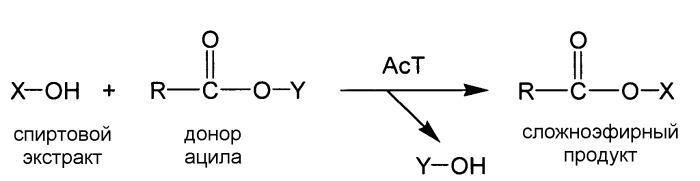 Композиция и способ для очистки ткани или поверхности от загрязняющего вещества, содержащего триглицерид (варианты)