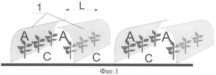 Способ создания условий для выращивания теплолюбивых овощных культур в условиях открытого грунта и устройство для его реализации