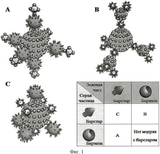 Конструкция на основе белковой пары барназа-барстар и способ ее получения
