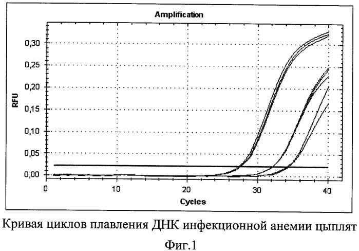 Синтетические олигонуклеотидные праймеры и способ выявления днк вируса инфекционной анемии цыплят с помощью синтетических олигонуклеотидных праймеров в полимеразной цепной реакции в режиме реального времени
