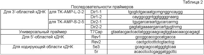 Гены пшеницы triticum kiharae, кодирующие антимикробные пептиды