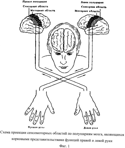 Способ диагностики функциональной межполушарной асимметрии у правшей и левшей