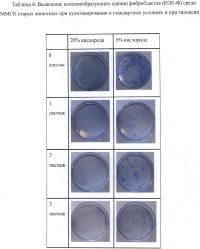 Ex vivo способ повышения качества клеток-предшественников от возрастных доноров