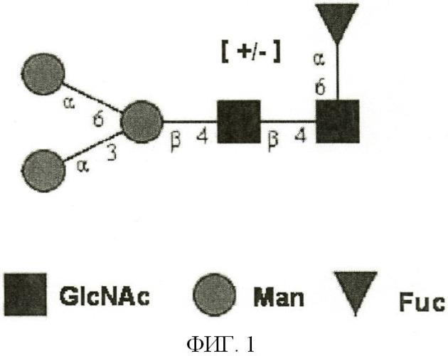 Содержащие галактоза-альфа-1,3-галактозу n-гликаны в гликопротеиновых продуктах, полученных из клеток сно