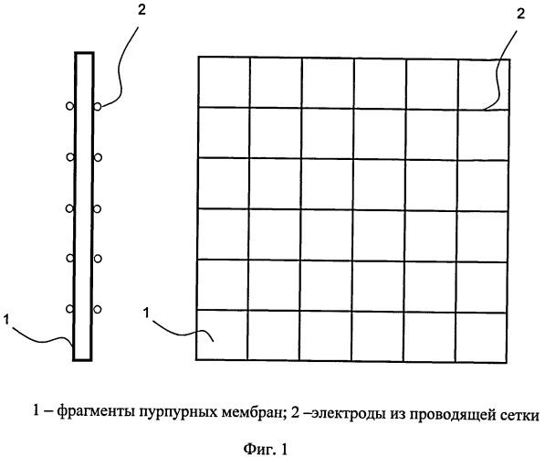 Дозиметр-радиометр на основе биологических структур