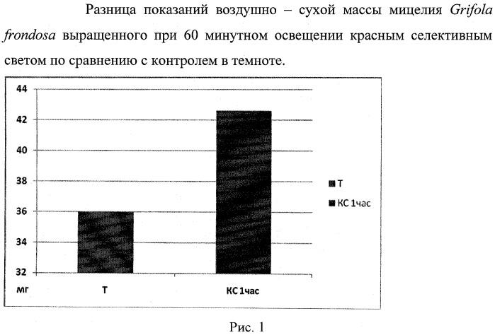 Способ выращивания мицелия grifola frondosa