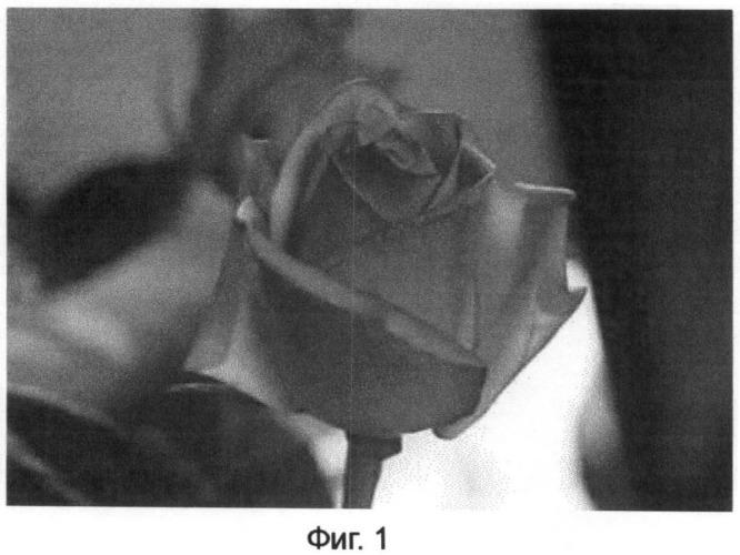Состав для окрашивания лепестков цветов, способ окрашивания таким составом и растения с лепестками цветков, окрашенными с его помощью