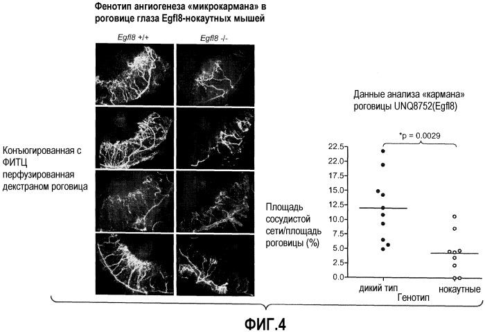 Способы ингибирования ангиогенеза с помощью антагонистов egfl8