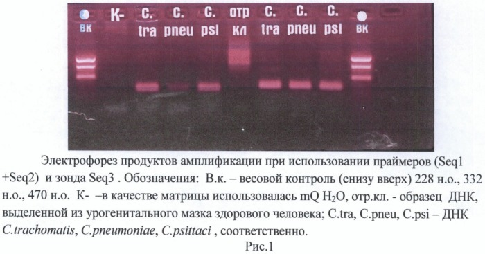 Олигонуклеотиды и способ определения днк бактерий, относящихся к семейству chlamydiaceae