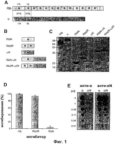Слитый белок, способный индуцировать защитный иммунитет против стрептококка группы в, и вакцина, содержащая такой белок
