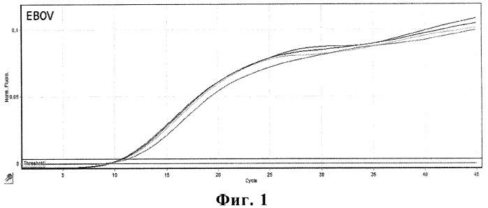 Набор олигонуклеотидных праймеров и флуоресцентно-меченых зондов для видоспецифичной экспресс-идентификации вируса эбола-заир методом полимеразной цепной реакции