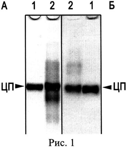 Способ получения особо чистого препарата ферроксидазы церулоплазмина и/или фактора свертывания крови протромбина. аффинный неомициновый сорбент для их получения