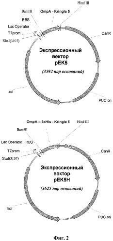 Способ получения рекомбинантного антиангиогенного полипептида