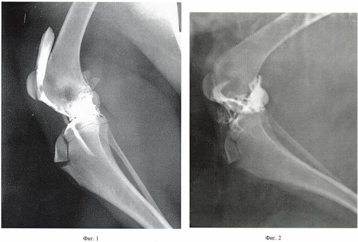 Способ введения лекарственных средств в полость коленного сустава у собак