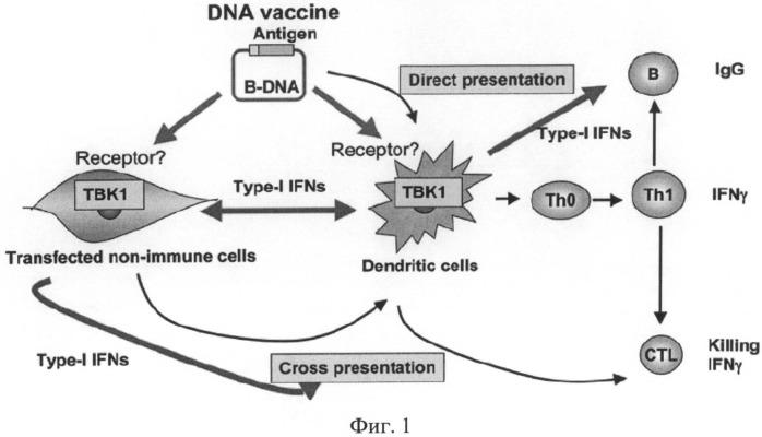 Способ лечения онкологических заболеваний