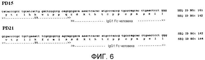 Sparc-связующие пептиды и их применение