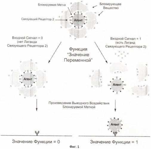 Комплекс логического элемента на основе биомолекул (варианты)