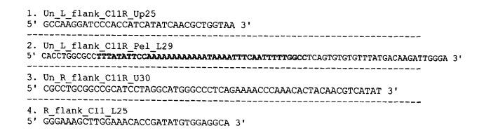 Рекомбинантная плазмидная днк pgem-puro-ds-apo, содержащая синтетический ген апоптина, фланкированный последовательностями генома вируса осповакцины из района c10l-c12l, и рекомбинантный штамм vvdgf-apos24/2 вируса осповакцины, продуцирующий апоптин