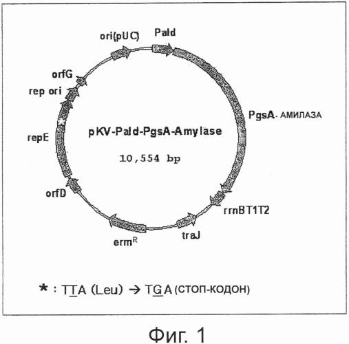 Стабильный вектор конститутивно высокой экспрессии для получения вакцины против впч и трансформированные этим вектором рекомбинантные молочнокислые бактерии
