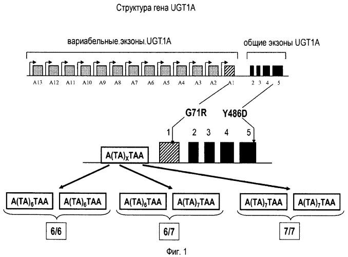 Оптимизация индивидуальных доз 5-фторурацила при режиме folfiri
