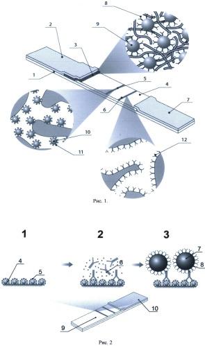 Способ снижения предела обнаружения иммунохроматографических методов контроля содержания низкомолекулярных соединений