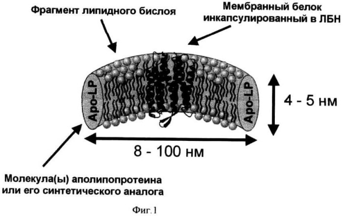 Способ ренатурации мембранных белков
