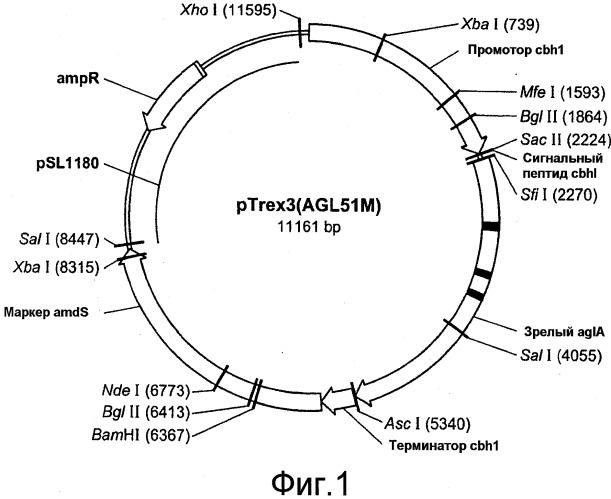 Чистящие композиции, содержащие трансглюкозидазу