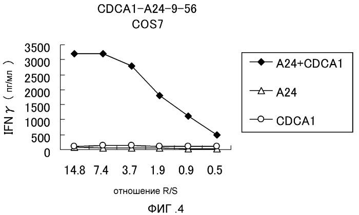 Cdca1 эпитоп-пептиды и содержащие их вакцины