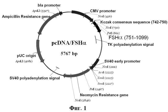 Клеточная линия hufshik, секретирующая рекомбинантный человеческий фсг