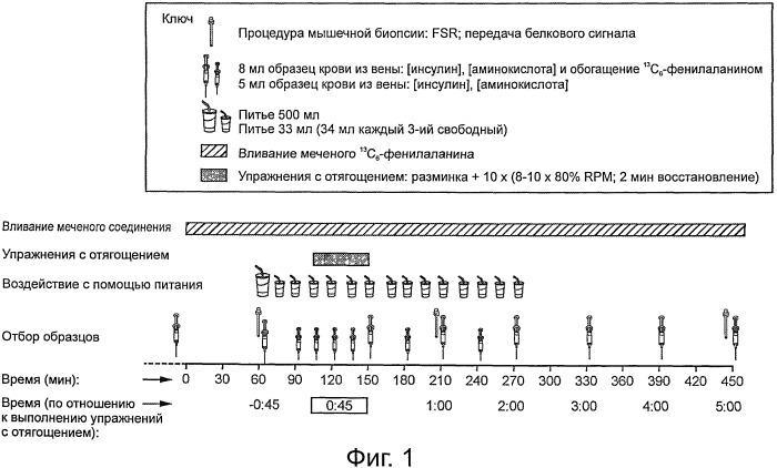 Регламенты дозирования для увеличения синтеза белка у активных индивидуумов