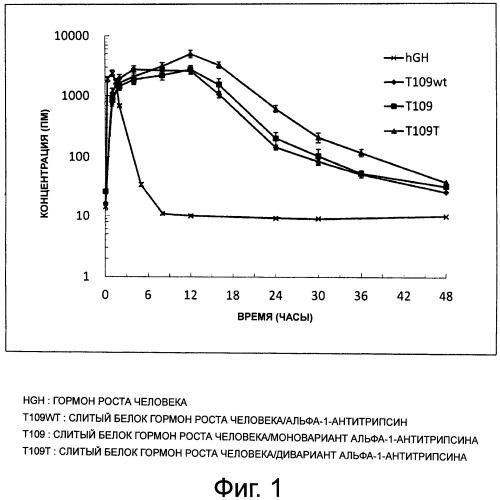Слитый белок или пептид с увеличенным временем полужизни in vivo, поддерживаемый за счет замедленного высвобождения in vivo, и способ увеличения времени полужизни in vivo с его применением