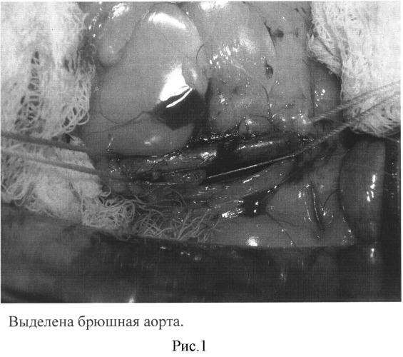Способ оценки функционального состояния эндотелия экспериментальных животных после реконструктивных операций на брюшной аорте