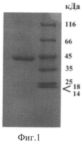 Рекомбинантный штамм дрожжей yarrowia lipolytica - продуцент фитазы